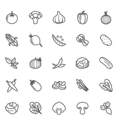 Set of outline stroke vegetable icon vector