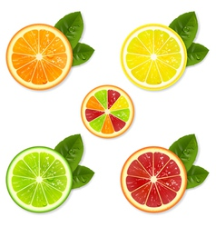 Citrus fruit set vector
