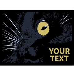 Cat on a black background vector