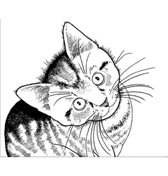 Realistic drawing of a kitten vector
