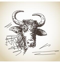 Portrait of buffalo vector