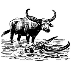 Water buffalo vector