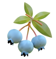 Blueberry on branches vector