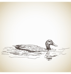 Duck in water vector
