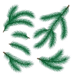 Set of fir branch vector
