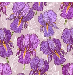 Purple iris vector