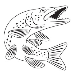 Pike fish vector