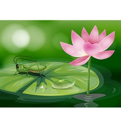A grasshopper above a waterlily beside a pink vector