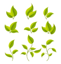 Green leaves set vector
