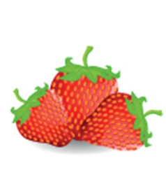 Fresh strawberries vector