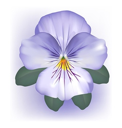 Pansy viola flower bloom vector