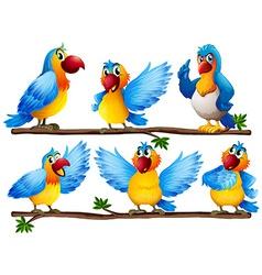 Parrot vector