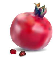 Pomegranate with seeds vector