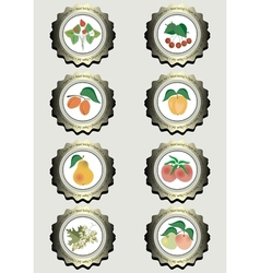 Collection of icons with fruits vector