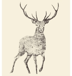 Deer engraving vintage vector