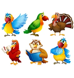 Colourful feathered creatures vector