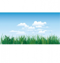 Grass on sky background vector