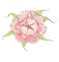 Flower - pink peony vector