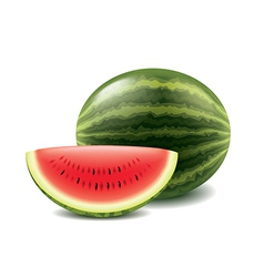 Watermelon and slice isolated on white vector