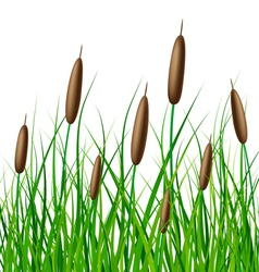 Reed with grass vector