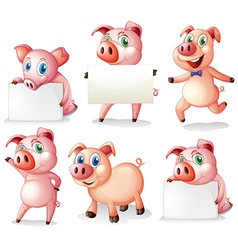 Pigs with empty signboards vector