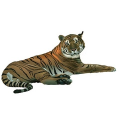 Laying tiger vector