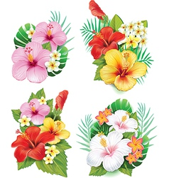 Arrangement from hibiscus flowers vector