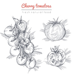 Tomatoes set vector