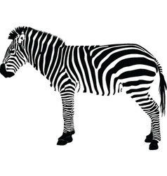 Zebra silhouette vector