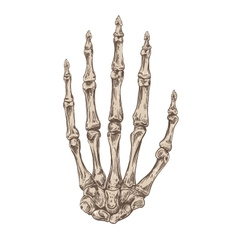 Hand drawing skeleton hand vector