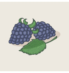 Doodle blackberries and leaf vector