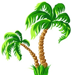 Two palm trees isolated on a white backgrou vector