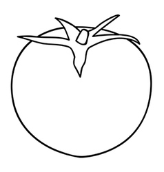 Sketch line drawing of tomato vector