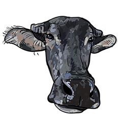 Drawing of buffalo head vector