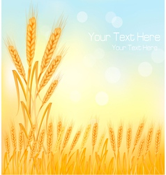 Background wheat ears vector