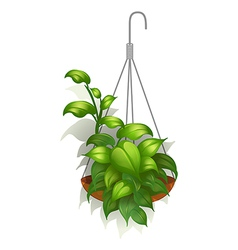 A hanging green plant vector