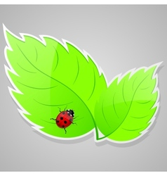 Green leaves with ladybird vector