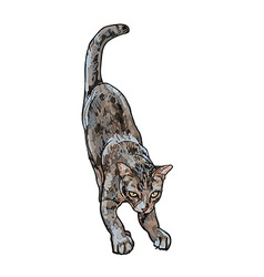 Adorable cute cat stretching body vector