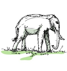 Elephant sketch vector