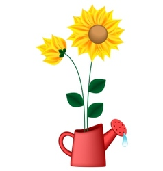Watering can with sunflowers vector