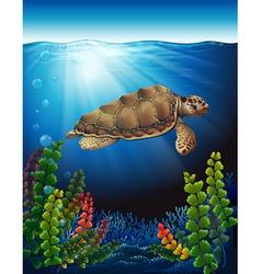 A sea turtle underwater vector