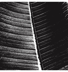 Background leaf vector