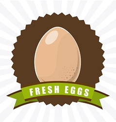 Fresh eggs vector