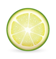 Sliced lime vector