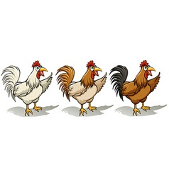 Group of roosters vector