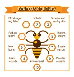 Infographic placard about benefits of honey vector