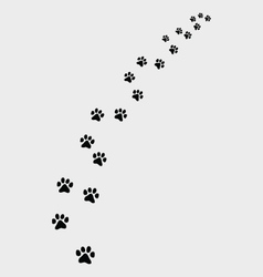 Footprints of cat vector