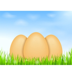 Eggs in grass vector