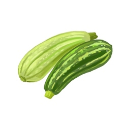 Picture of two zucchini vector
