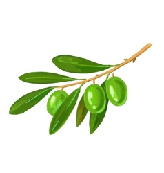 Picture of olive tree branch vector